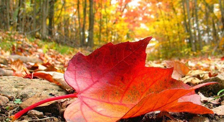 Hoja de otoño en un bosque