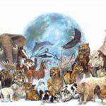 Día del animal – 29 de abril