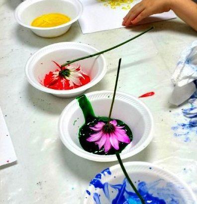 Proyecto Primaveral Experimentamos Con Las Plantas Mi